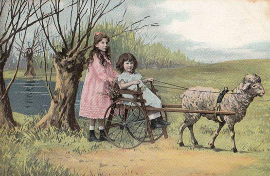 Child Farming Girl Driving Her Sheep Antique Transportation Truck Old Postcard