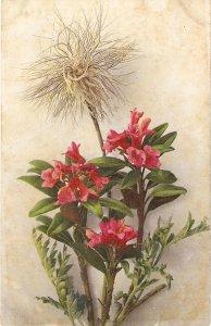 bEAUTIFUL FLOWERS oLDVINTGE ANTIQUE sWISS POSTCAR