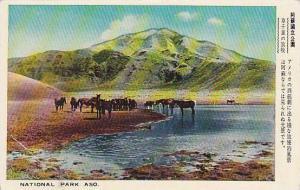 Aso National Park, Horses, Kyūshū, Japan, 1910-1920s