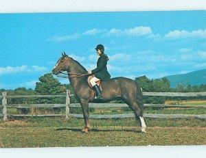 Pre-1980 MORGAN HORSE AT SPRUCE GLEN FARM Pawlet by Rutland & Dorset VT AD2277