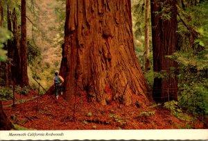 California Giant California Redwoods
