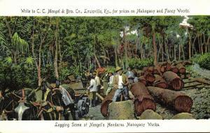 br. honduras, BELIZE, Logging Scene, Horse Carts, Mengel's Mahogany Camp (1905)
