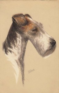 AS: Portrait of Wire-haired Fox Terrier Dog 1900-10s