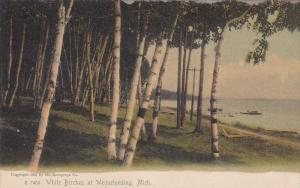 15346 MI Wequetonsing  1904   The White Birches on the lake shore