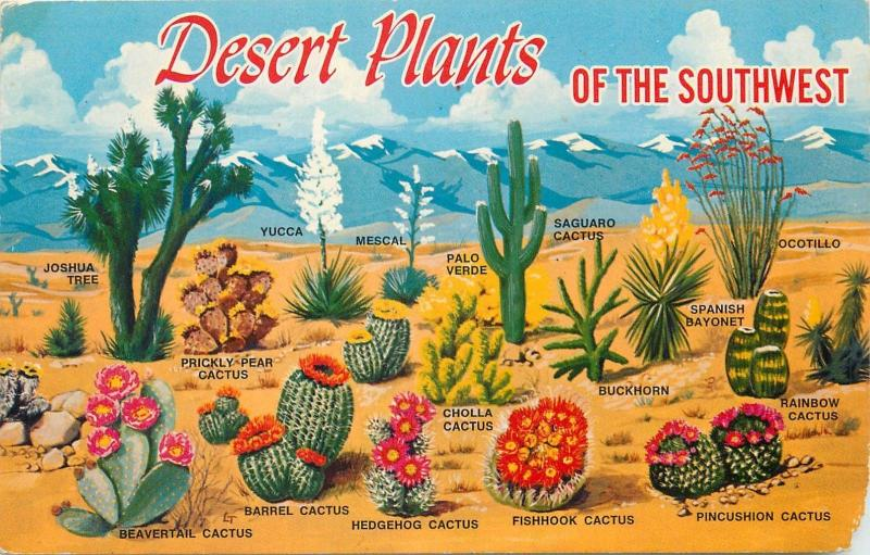 Desert Plants of the Southwers cactuses