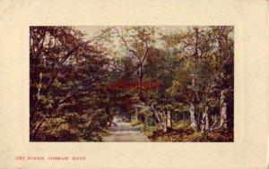 THE WOODS COBHAM KENT ENGLAND UK 1908