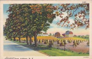 New York Greetings From Addison 1943 Curteich