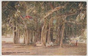 Sri Lanka / Ceylon; Banyan Tree, Negombo PPC By Plate, Unposted, c 1930's