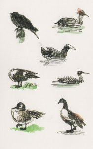 Regents Park Birds Crested Grebes Dabchicks Crows Painting Postcard