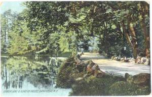 Lower Lake and Road in Saratoga, New York, 1909 Divided Back