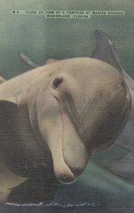 Marineland , Florida , 30-40s ; Dolphin Closeup