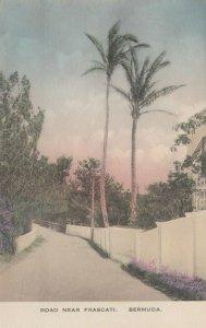 Road near Frascati, Bermuda, 1900-10s