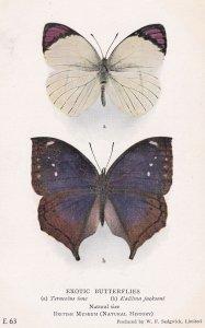 Mallika Jacksoni Papilionoidea African Old Moth Butterfly Butterflies Postcard