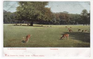 Hertenkamp Deer Park Gravenhage Hague Den Haag Netherlands #2 1905c postcard
