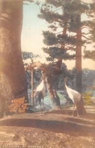 Okayama Japan Korakuyen Crane Birds Antique Postcard K107423