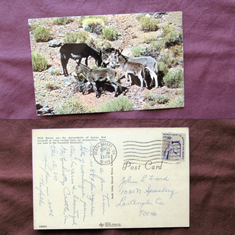 Wild Donkeys, Feral Burros,Vtg Postcard, Death Valley, Southwest, Sagebrush