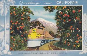 Trains Streamliner Passing Through An Orange Grove In California