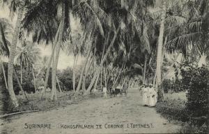 suriname, CORONIE TOTTNES, Kokospalmen, Cocos Palm Trees (1910s) Stamp