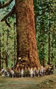 CA - Santa Cruz County. Big Tree Grove, U.S. Cavalry at Grizzly Giant