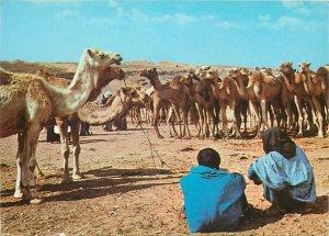 Africa Morocco Marakeck camel caravan tourist pilgrim native lifestye desert