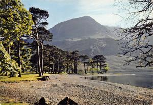 Vintage Giant Size Lake District Postcard, The Buttermere Pines, Cumbria OS148