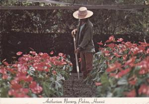 Anthurium Nursery, PAHAO, Hawaii, 50-70's