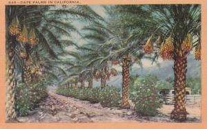 California Date Palms