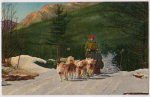 Team of Ed Clark's Eskimo Sled Dogs, N Woodstock NH