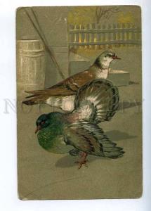 233485 PIGEON Dove Vintage PFB #3021 Embossed postcard