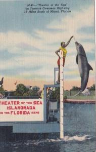 Florida Keys Jumping Porpoise At Theatre Of The Sea Islamorada 1953 Curteich