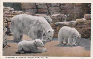 Polar Bears Washington Park Zoo Milwaukee Wisconsin
