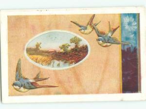 Divided-Back BIRDS SCENE Pretty Postcard AA8834