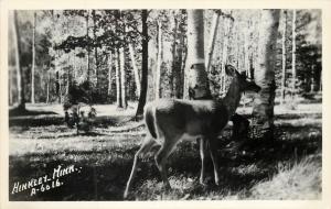 Hinkley MN~Deer Among the Birch Trees~1950s~RPPC Real Photo Postcard