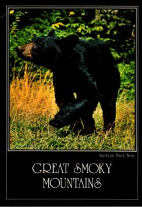 Tennessee Great Smoky Mountains American Black Bear 1985