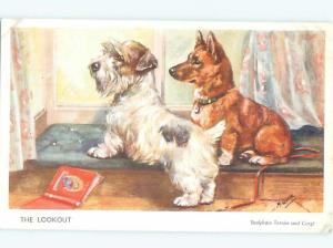 Pre-Linen signed PAIR OF CUTE DOGS AT THE WINDOW AC5370