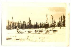 RP; Eskimo dog sled team at work , Alaska, 30-40s #2