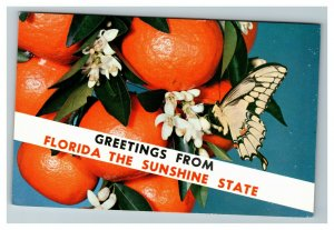 Banner Greetings from Florida, Swallowtail Butterfly c1974 Postcard L8