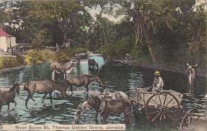 Jamaica St Thomas Golden Grove River Scene