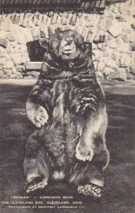 Ohio Cleveland Beggar Cinnamon Bear
