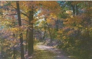 Kentucky Autumn Colors At Mammoth Cave National Park