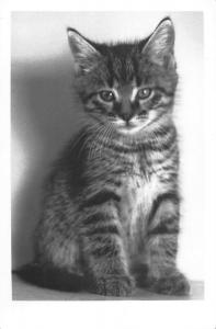 BR88970 real photo cat chat   animal animaux