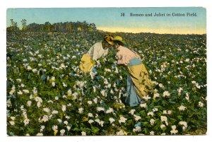 Romeo & Juliet in Cotton Field