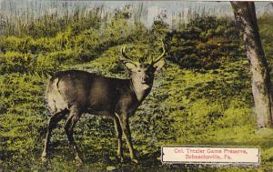 Pennsylvania Schnecksville Deer At Colonel Trexler Game Preserve