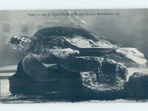 Pre-1980 MARINELAND SCENE Between Palm Coast & St. Augustine Florida FL AF9536
