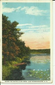Lake Winnepesaukee, N.H. Where The Water Lilies Grow Winnipesaukee