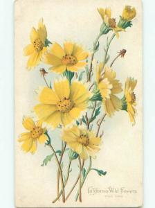 Divided-Back BEAUTIFUL FLOWERS SCENE Great Postcard AA3826
