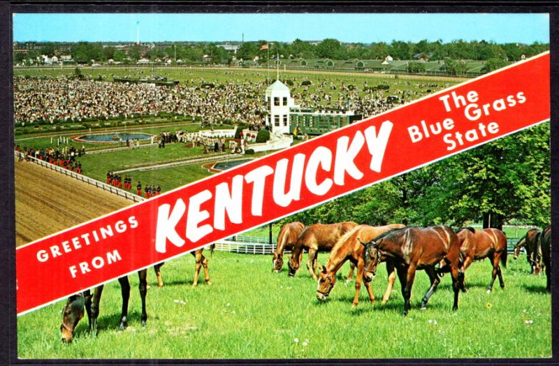 Greetings From Kentucky Horses