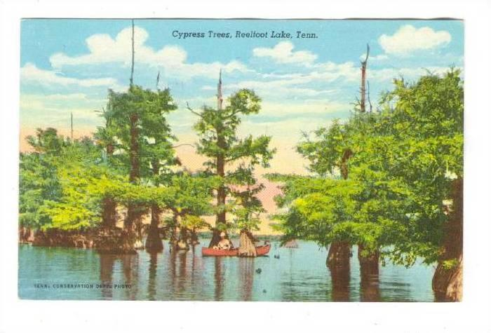 Cypress Trees, Reelfoot Lake, Tennessee, 00-10s / HipPostcard