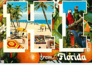 Old vintage Postcards Hi Florida Oranges Parrots # 1632A