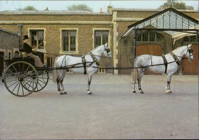 The Royal Mews Tandem Cart drawn by Montreal Sydney Serge Lemoine Australia